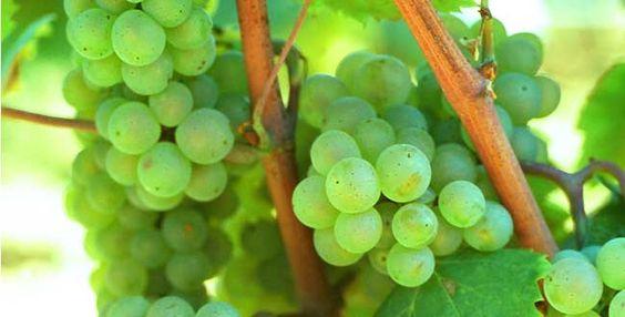 Image issue du site Web http://avis-vin.lefigaro.fr/var/img/125/31160-650x330-notre-selection-de-vins-de-bourgogne.jpg