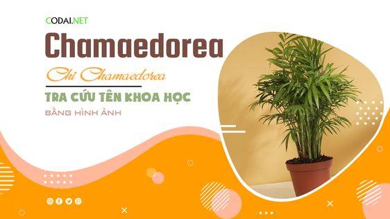 Tra cứu tên khoa học của các loài cây thuộc chi Chamaedorea bằng hình ảnh