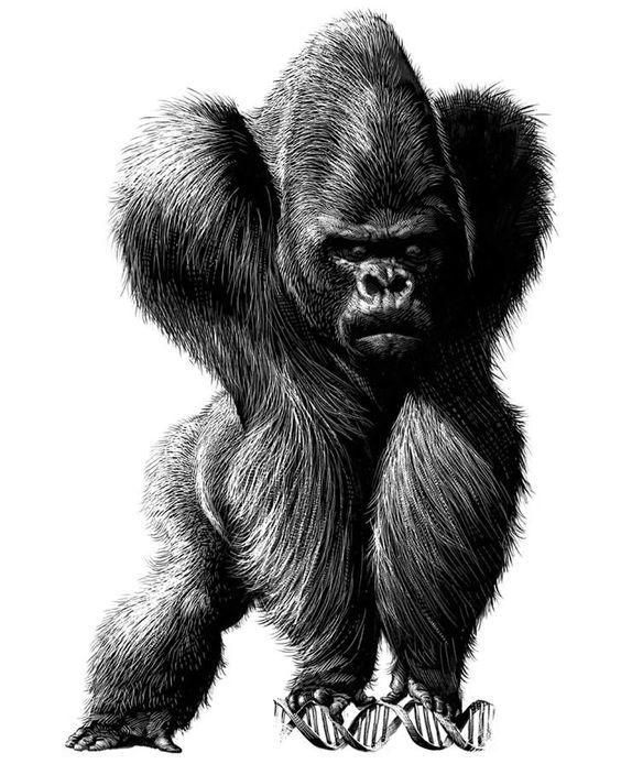 Gorilla with Deoxyribose Nucleic Acid #whoa #illustration