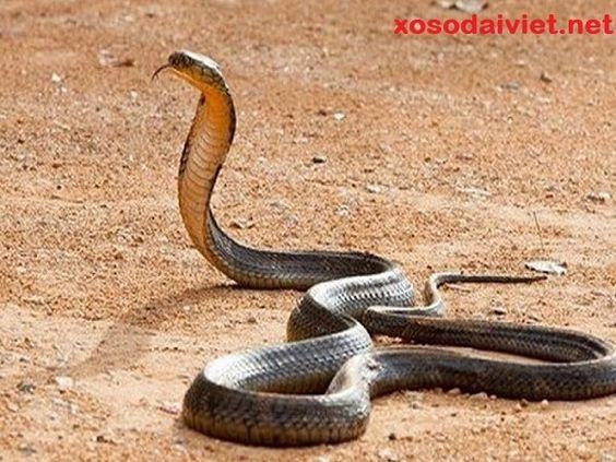 mơ thấy rắn đuổi