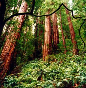 Muir Woods: Family Travel, God, Favorite Places Spaces, Catie S Favorite, Family Vacations, Muir Woods Beach