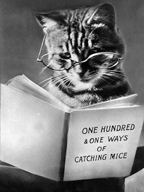 Kitty reading: