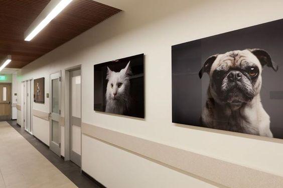Veterinary decor. Wall art Building a Vet Practice