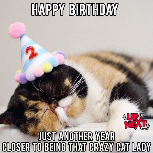 Funny Happy Birthday Celebration Memes Cat Lady Birthday Cat Birthday Funny Birthday Meme