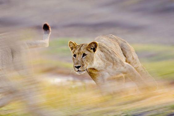 Michael Viljoen Wildlife Photography