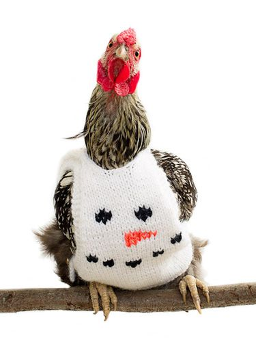 Is there anything more adorable than a chicken in a hand-knitted sweater? (Photo: Nicole McArthur)