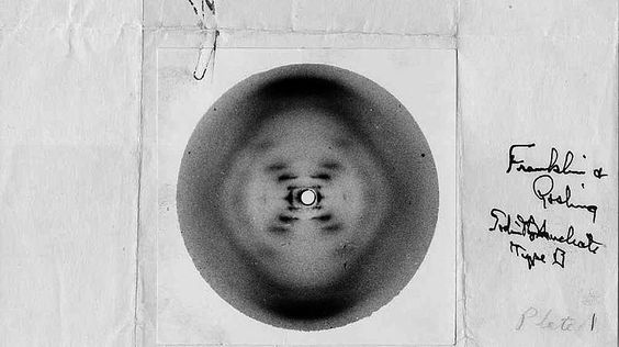 Rosalind Franklin und der DNA-Diebstahl.Die prämierten Wissenschaftler hatten sich nämlich ein regelrechtes Wettrennen mit dieser Konkurrentin geliefert. Dabei hatten sie unbefugt Einblick in die unveröffentlichten Forschungsunterlagen von Rosalind Franklin bekommen. Der Wissensvorsprung der Dame war dank ihrer Röntgenstruktur-Aufnahmen so groß, dass der Nobelpreis in den Augen vieler Kritiker eigentlich ihr gebühren würde, denn: Lange vor der Nobelpreis-Verleihung hatte Rosalind Franklin…