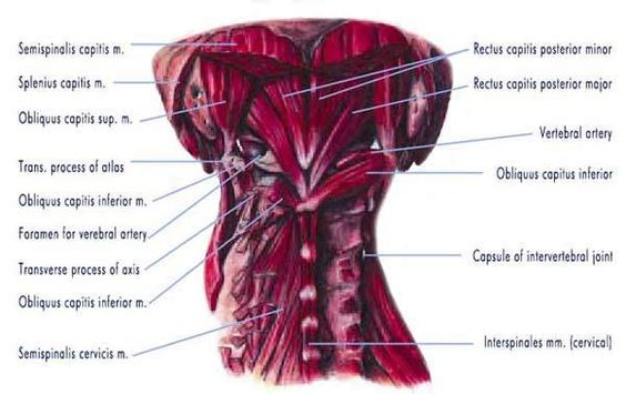 Working with Dura Mater - Freedom From Pain Institute