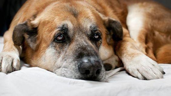 Come capire se un cane soffre di artrite o artrosi