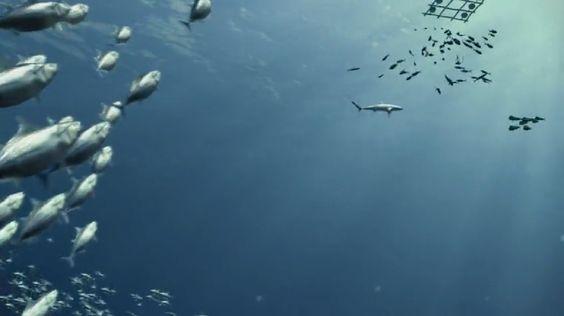 Préservation des écosystèmes marins