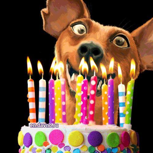 Happy Birthday Funny For Her Birthday Gif Animated Birthday Cards Happy Birthday Gif Images