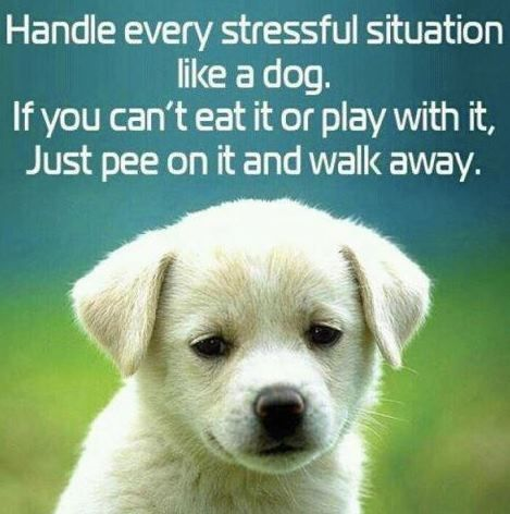 dog quotes...:) Love this sooo much!! LOL!
