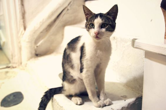A cat that Zoe spotted in Mykonos!