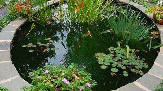 Pompe et filtre pour l'entretien du bassin de jardin