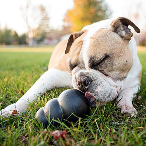 15 Indestructible Dog Toys For Your Tough Chewer Smart Dog Toys