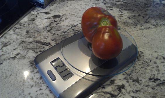 Урожай 2013: первый помидор