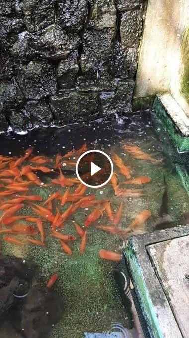 Como a natureza é bela veja que rio lindo com esses peixe
