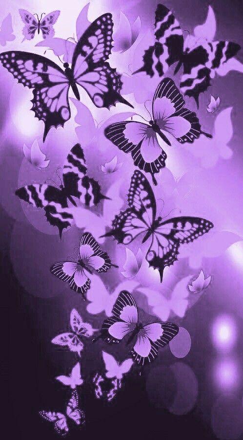 Pin By Nazim On Katzen Purple Butterfly Wallpaper Butterfly Wallpaper Backgrounds Butterfly Wallpaper