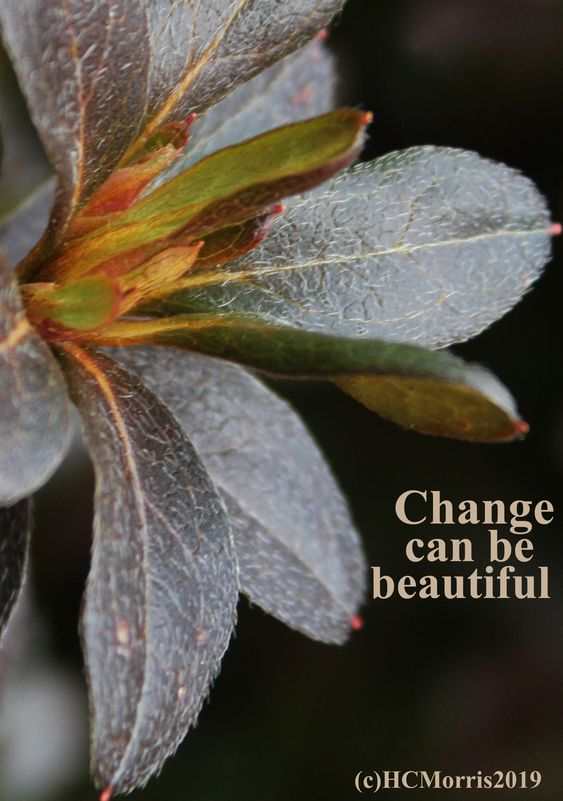 azalea leaves in the fall with change quote