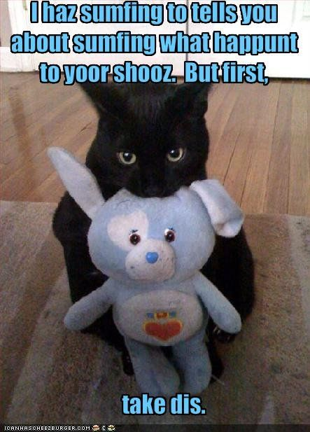 Funny Cat Pictures With Captions | Funny kitty cat ...