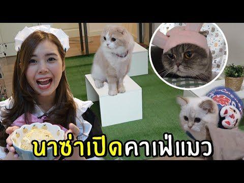 นาซ า ซ มบ า บล อาย แมวหน าเหว ยง Youtube ในป 2021