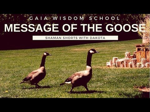 Shaman Short 012 Meaning Of The Goose Dakpta Walker Sillygoose