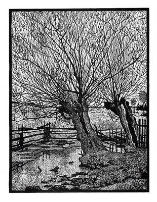 Albert König, Alte Weiden/Old Willows, wood cut, 1912