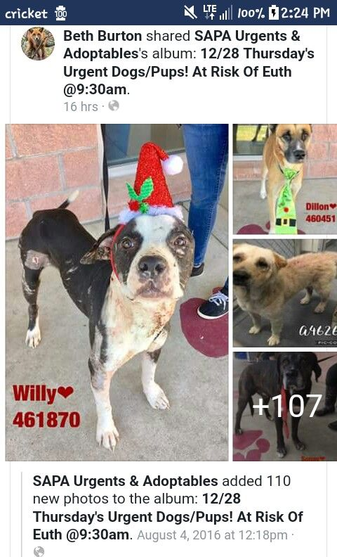 Pin By Morice On Sapa San Antonio Tx Ongoing Euthanasia Album Dog Adoption Rescue Dogs Animal Rescue