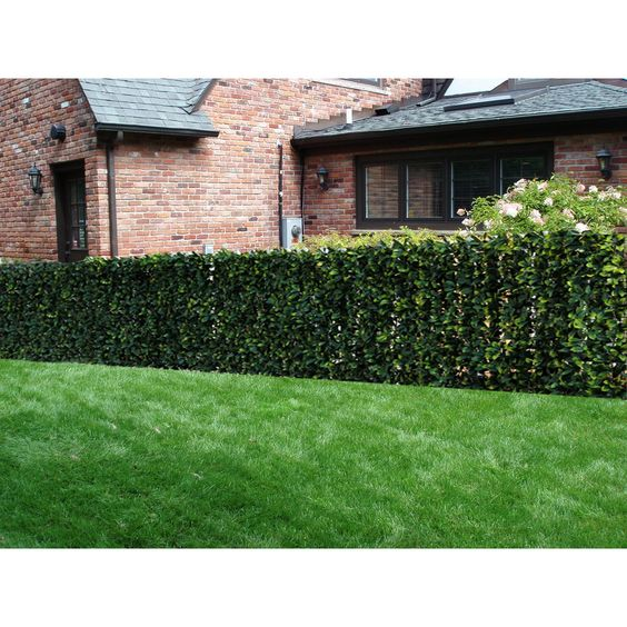 Century Outdoor Living artificial Plane hedges are perfect for your patios and garden to create privacy space. They are easy to install on your fence not only perfect decorations but cover unsightly views.
