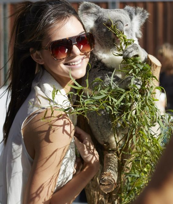 koala kisses and a high pony