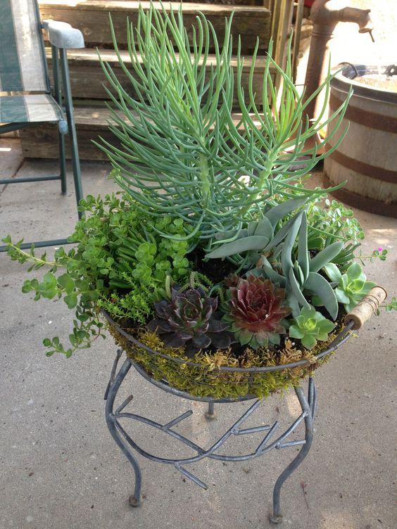 Succulent dish garden garden i love succulents for Succulent dish garden designs