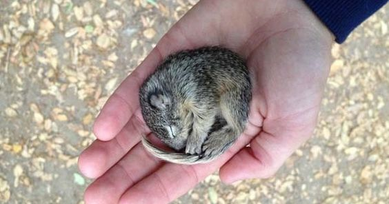 This Baby Squirrel Was Found Freezing And Dying. But The Last Photo Made My Day