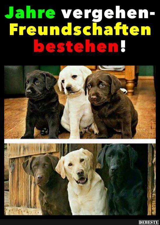 Jahre Vergehen Freundschaften Bestehen Lustige Humor Bilder Tiere Lustige Bilder