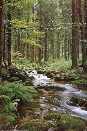 Stream in Forest art print at ArtPosters.com  #forest
