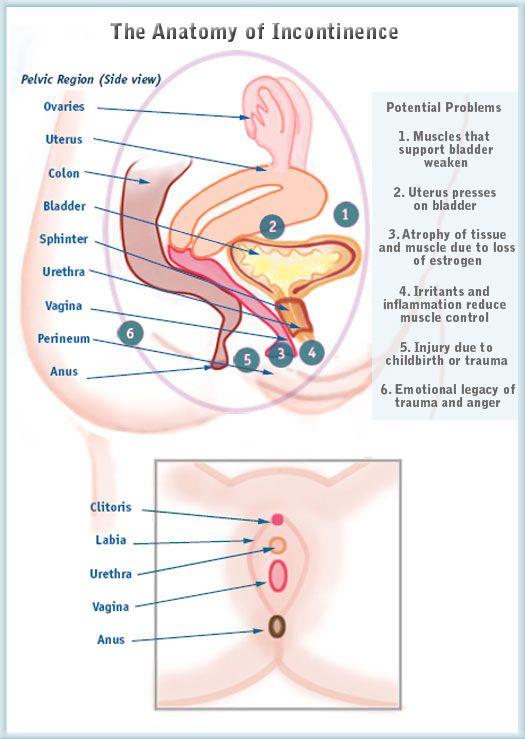 kako izleciti prostatu