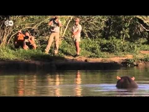 TV BREAKING NEWS Artenvielfalt - die Flusspferde von Swasiland | Projekt Zukunft - http://tvnews.me/artenvielfalt-die-flusspferde-von-swasiland-projekt-zukunft/