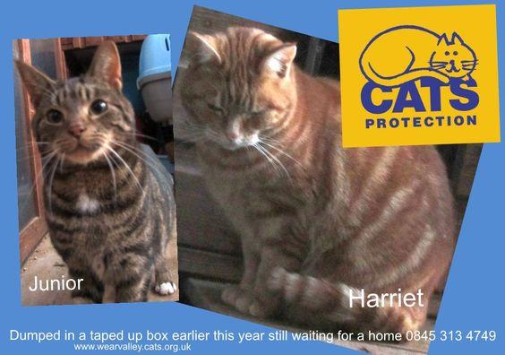 www.wearvalley.cats.org.uk
