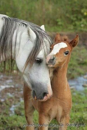 Horse photography by Blanka Satranova via @Christin Fonn Tømte Fonn Tømte Miller   Maverick Style by myrtle