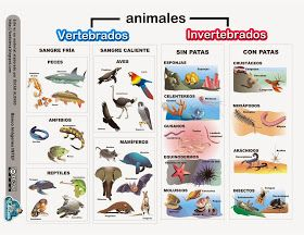 La Eduteca: RECURSOS PRIMARIA   Esquema sobre los animales vertebrados e invertebrados