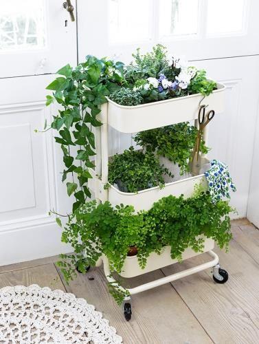 plantjes for the home pinterest gardens planters. Black Bedroom Furniture Sets. Home Design Ideas