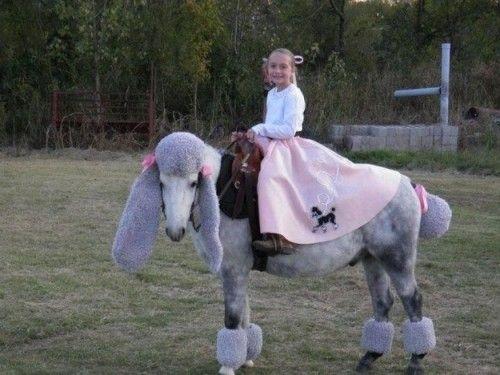 Poodle Skirt: Horse Poodle, Poodle Horse, Poodle Skirts, Halloween Costumes, Horse Costumes, Costume Class, Costume Idea, Poodle Pony