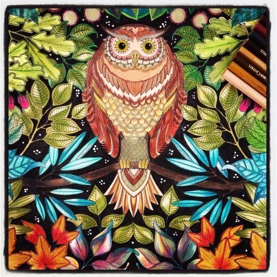 Galleries Secret Gardens And Owl On Pinterest