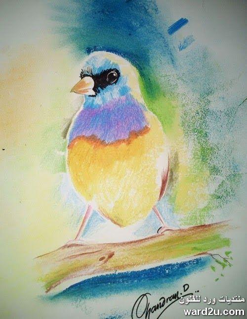 التربية الفنية من الهند مباشر الى ورد للفنون Art Painting Animals