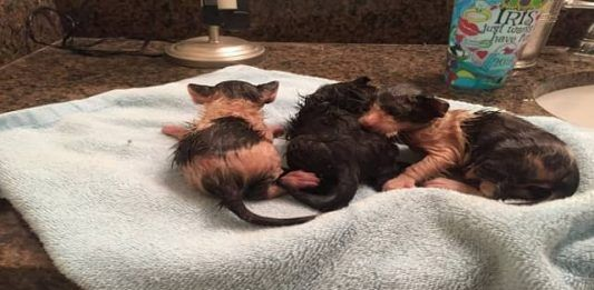 Kind Person Rescues Lost Kittens In Louisiana Floods And Changes Their Lives Forever Kittens Tiny Kitten Kind Person