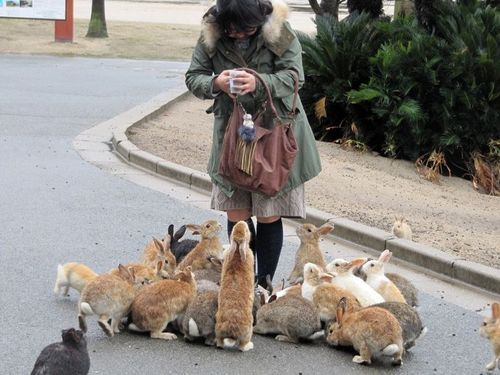 Ted, Ted, the bunnies are back