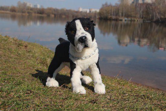 Alabai Baikal By Ekaterina Evdokimova Dogs Dogs Puppies Dog