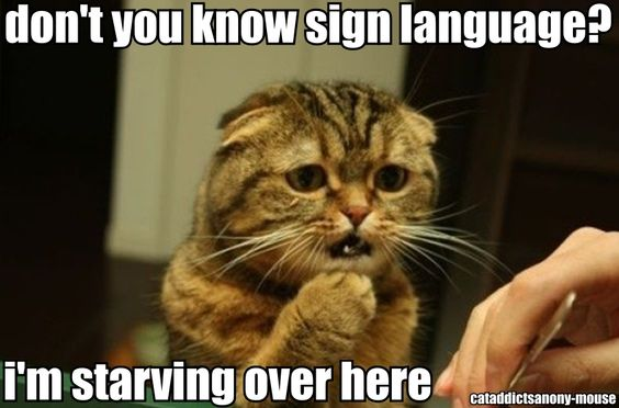 C.A.A. - cat addicts anony-mouse: Funny Animals, Kitty Cats, Cute Cats, Funny Pictures, Funny Cats, Crazy Cat, Funny Stuff, Americat Sign