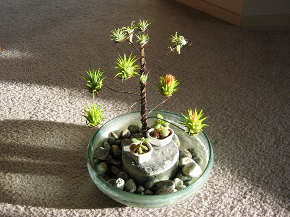 I love this air plant display.