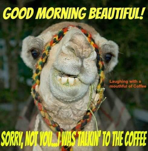 60 Wednesday Coffee Memes Images Pics To Get Through The Week Morning Quotes Funny Funny Good Morning Images Funny Good Morning Quotes