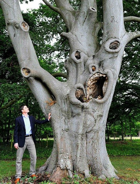 This gruesome tree in the grounds of Stowlangtoft Hall, near Bury St Edmunds, Suffolk, shares an uncanny resemblance with Edward Munch's classic Scream painting.: